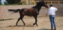 Doma e Addestramento Cavalli