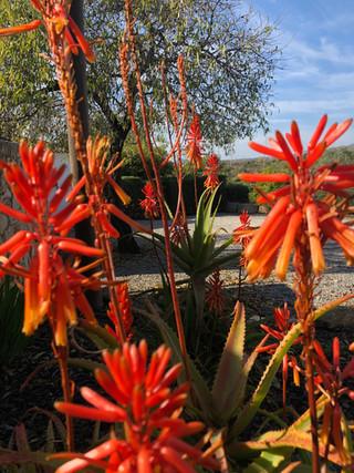 floras - montinho da luz