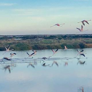 flying_flamingos.jpeg