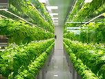 Urban agriculture.jpg