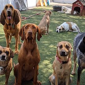 Lakewood Dog Daycare Facility