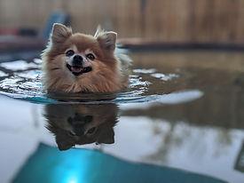 Denver Dog Daycare Dog