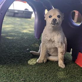 Lakewood Dog Daycare Dog