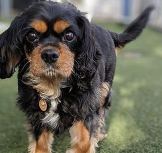 Small Dog Boarding Condos in Denver