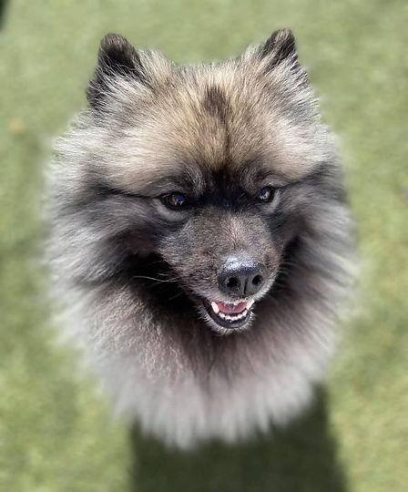 Dog at Doggy Daycare in Denver