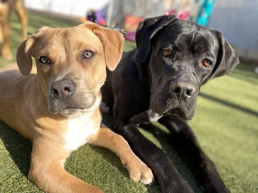 K-9 Castle Denver Doggie Daycare Dogs at Play