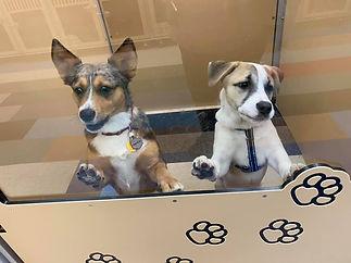 Medium Dog Boarding Rooms in Denver