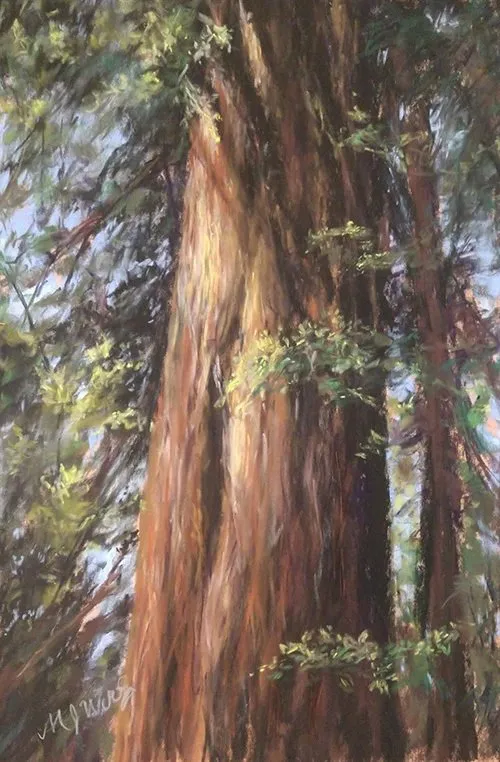 "Honorable Mention - ""Coastal Redwoods"" by Marianne Woolsey"