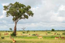 CeciliaClark-impala_boys_club_botswana-A