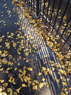 "HM Photography ""Gingko Leaves and Shadows"""
