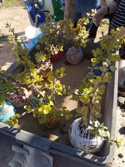 plaza américa horticultura