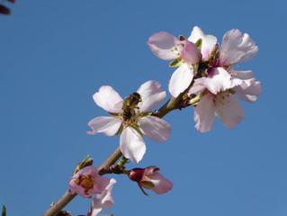 ¿Qué podemos hacer para salvar a las abejas de la extinción?