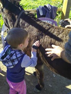 mediación con burros