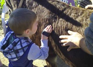 Actividades Escolares en la granja
