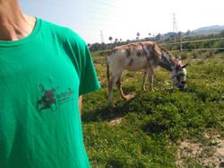 monitor burros alicante
