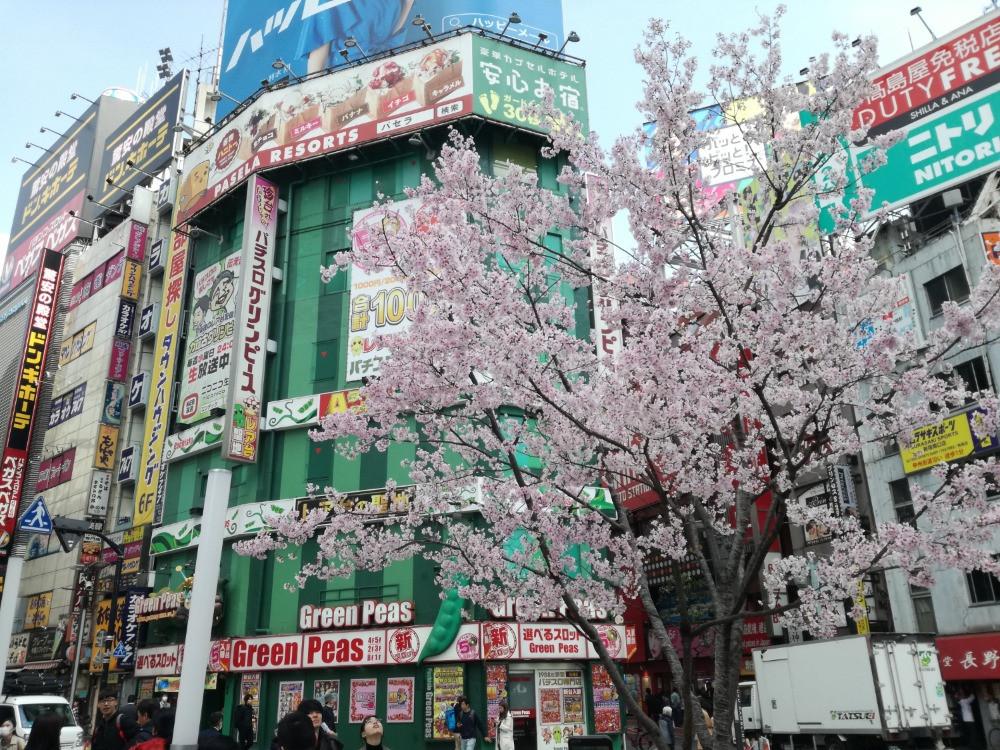 Kirschblüte in Shinjuku, Tokyo von Fabia Klinger
