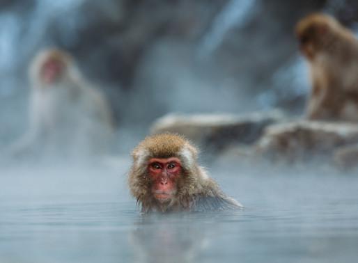 Onsen - Wellness auf japanisch