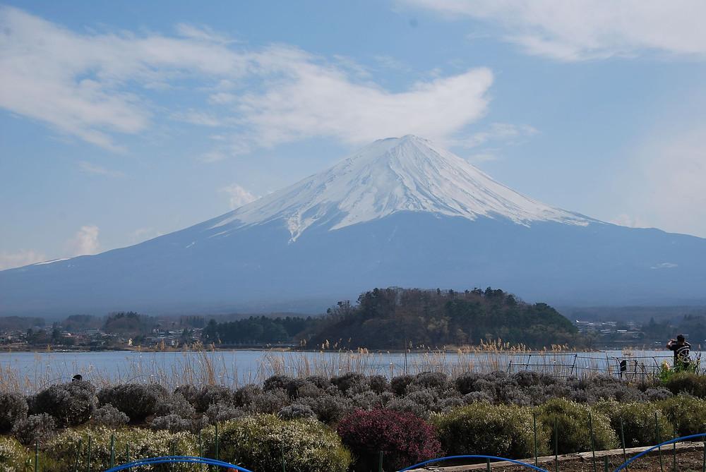 Fuji vom Oishi Park, Kawaguchiko