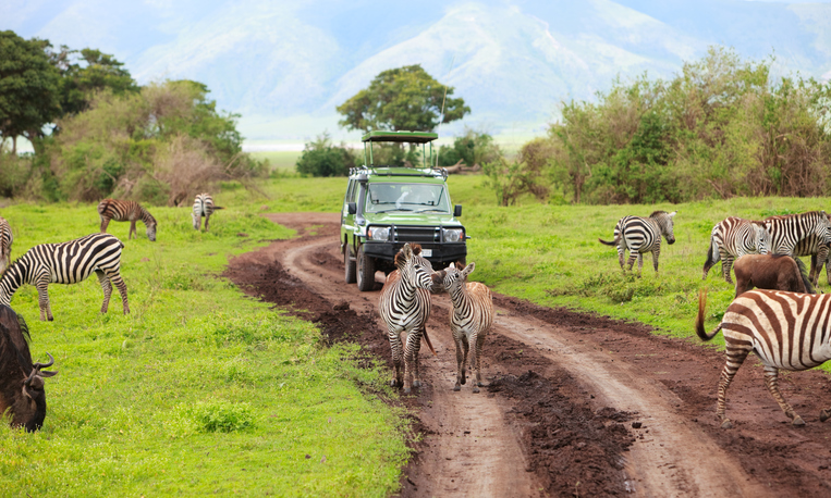 jeep zebras small