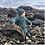 Thumbnail: Fjordgenser