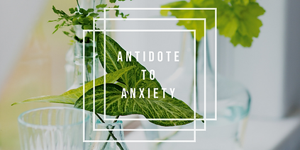 Antidote to Anxiety Weds.png