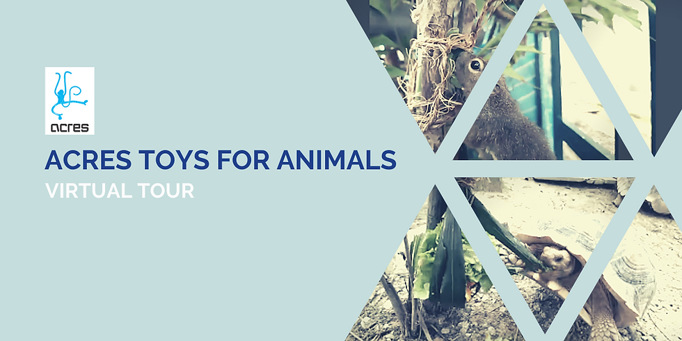 Hump Day Help: ACRES Toys for Animals Virtual Tour