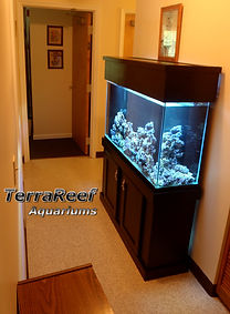 Reef Aquarium being installed