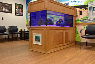 Fish tank Aquarium, Design, Installation, & maintenance services