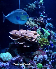 Coral Reef aquarium cleaned and maintained professionally