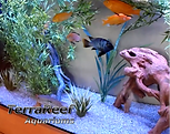 Freshwater Cichlid Aquarium maintained professionally