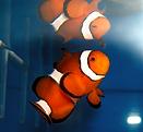 Clownfish aquarium installed by TerraReef