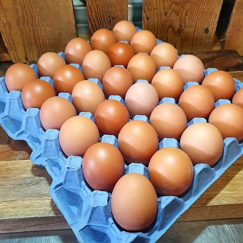 Tray of Eggs