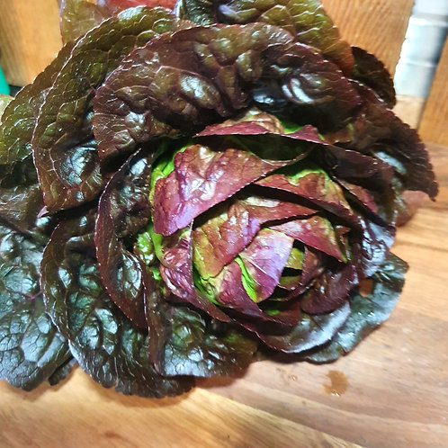 Cos Lettuce - Red