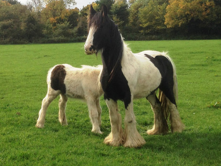 Meet our lead charity partner - HorseWorld Trust