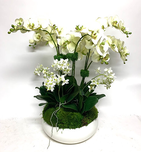 """3446 PALE GREEN ORCHIDS IN LG WHITE BOWL 20""""X28"""""""