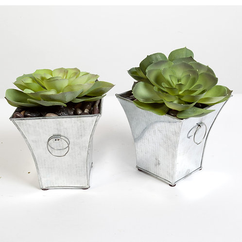 2128 Succulent Tin Set of 2 6x6