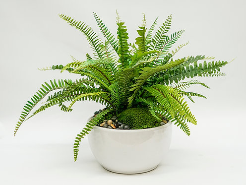 3229 FERN IN SM WHITE BOWL