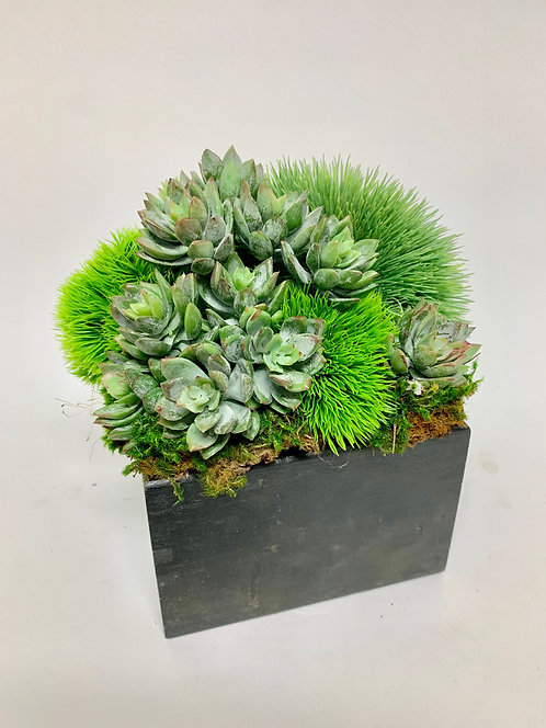 3276 SUCCULENTS, GRASS IN BLACK WOOD BOX 9X8