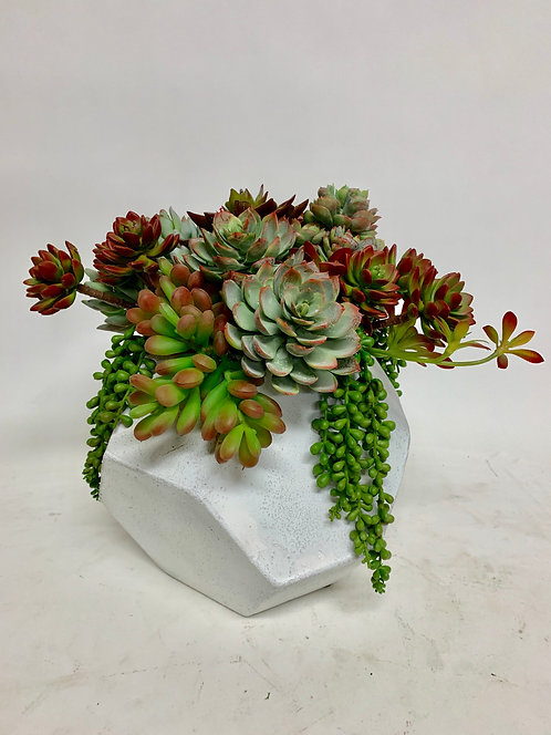3269 COLORFUL SUCC IN MD WHT HEX 11X12