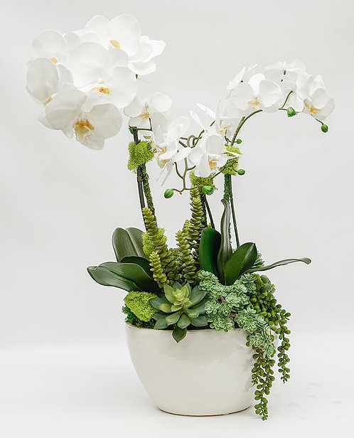 3459 ORCHIDS/SUCCULENTS IN OVAL POT
