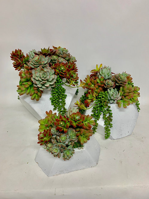 3271 SET OF 3 COLORFUL SUCC IN WHT HEX
