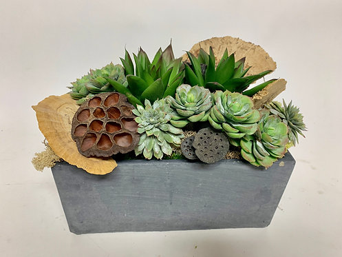 3390 SUCCULENTS/DRIED IN LOW CEMENT 14X8