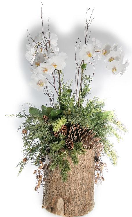 2790 Christmas Triple Orchid Log 42x30