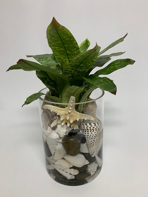 "3125 SHELL BROMELIAD IN 8"" GLASS"