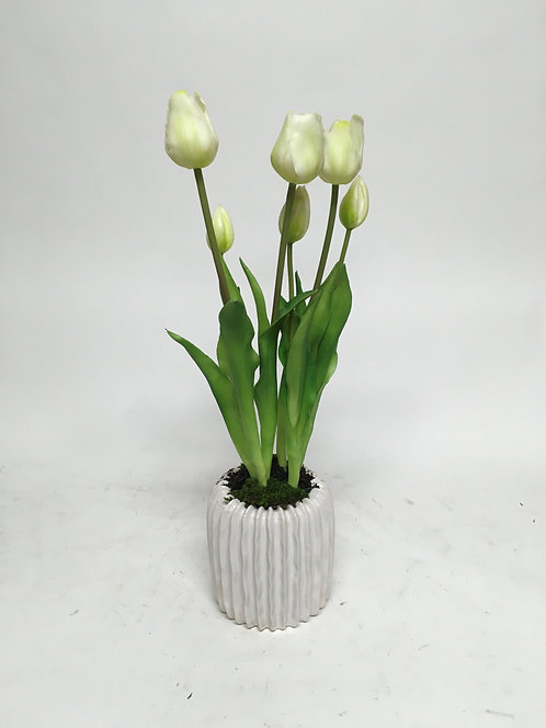 "3363 TULIPS IN SM HAVEN POT 5""X19"""