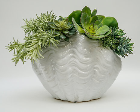3136 UPRIGHT CLAM SHELL/SUCCULENT