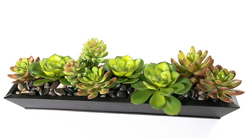 2742 Succulents in Md Zinc Tray 17x6