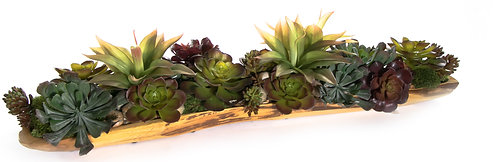 2743 Succulents in Hardwood Tray 9x34