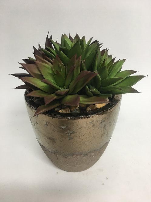 "3050 Succulents in Lg Bz Clay Pot 10""x8"""
