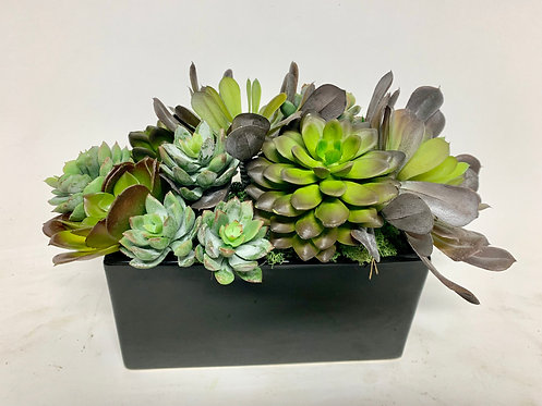 3277 SUCCULENTS IN BLK RECT PLANTER 12X7